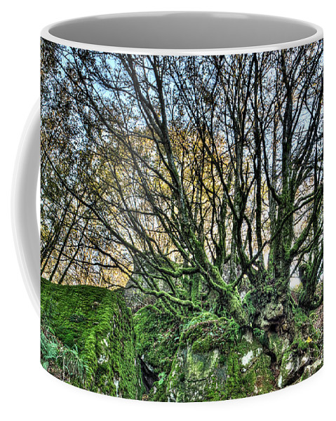 Forest Coffee Mug featuring the photograph The Mossy Creatures Of The Old Beech Forest 8 by Weston Westmoreland