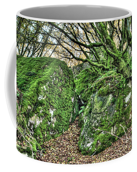 Forest Coffee Mug featuring the photograph The Mossy Creatures Of The Old Beech Forest by Weston Westmoreland