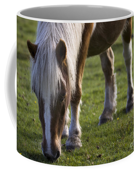 Palomino Horse Coffee Mug featuring the photograph The New Forest Pony by Angel Ciesniarska