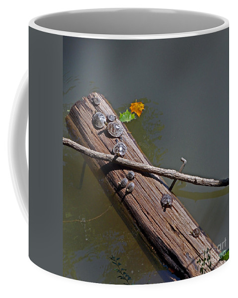 Nature Coffee Mug featuring the photograph The Nursery by Skip Willits