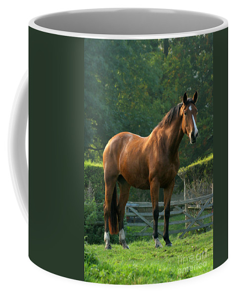 Horse Coffee Mug featuring the photograph The Observer by Angel Tarantella