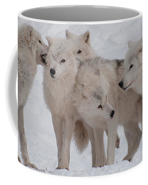 Arctic Wolves Coffee Mug featuring the photograph The Pack by Bianca Nadeau