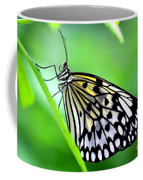 Butterfly Coffee Mug featuring the photograph The Paper Kite Or Rice Paper Or Large Tree Nymph Butterfly Also Known As Idea Leuconoe by Amanda Mohler