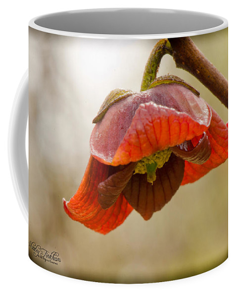 Native Coffee Mug featuring the photograph The Paw Paw Bloom by Shirley Tinkham
