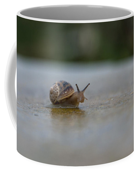 Snail Coffee Mug featuring the photograph The Peeping Snail by Focus Fotos