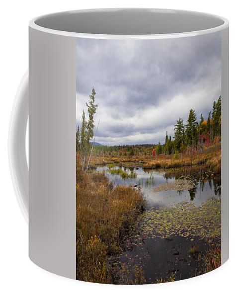 The Ponds Near Raquette Lake Coffee Mug featuring the photograph The Ponds Near Raquette Lake by David Patterson