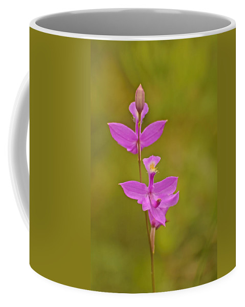Grass Pink Coffee Mug featuring the photograph The Prettiest Pink by Joshua McCullough