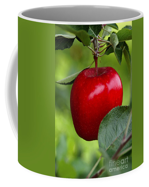 Apple Coffee Mug featuring the photograph The Red Apple by Anthony Sacco