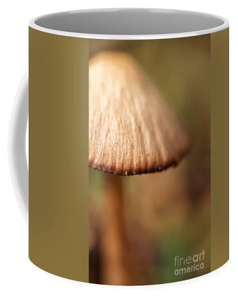 Mushroom Coffee Mug featuring the photograph The Secret World Of Shroooms by Lois Bryan