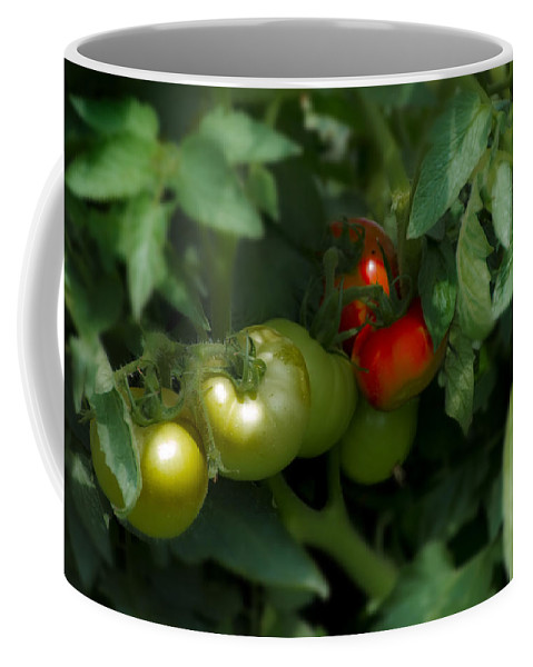 The Coffee Mug featuring the photograph The Tomato Plant by Bill Cannon