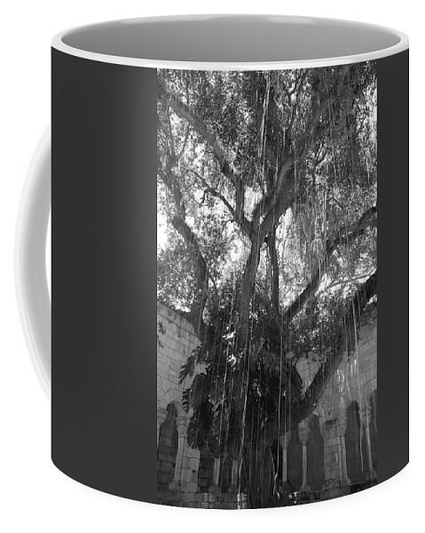 Black And White Coffee Mug featuring the photograph The Tree Vines by Rob Hans