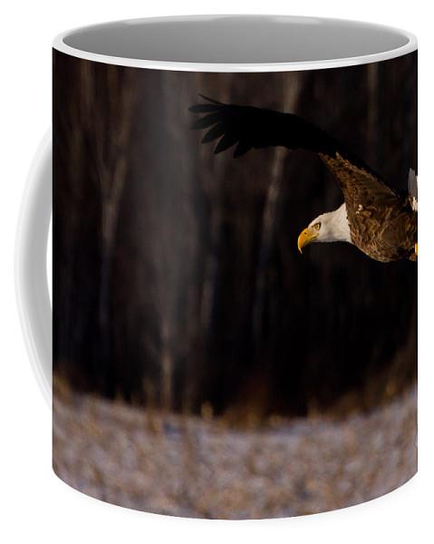 Eagle Coffee Mug featuring the photograph The Turn by Jan Killian