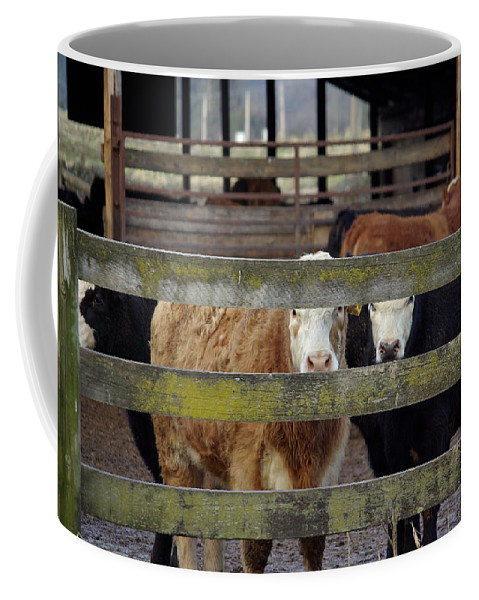 Cow Coffee Mug featuring the photograph The Watchers by Cindy Johnston