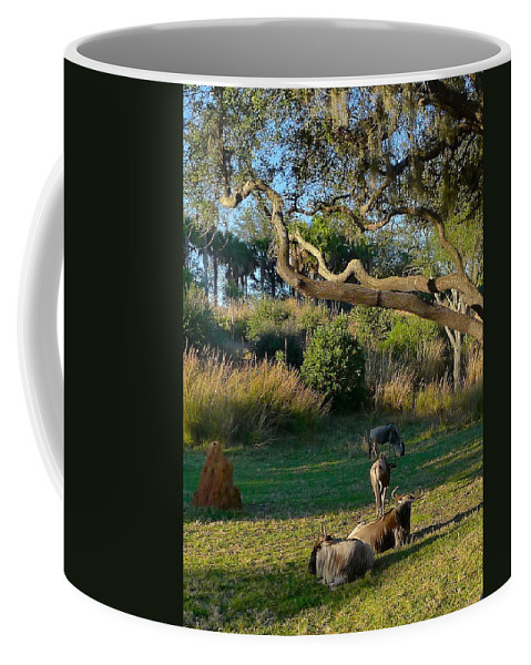 Animal Coffee Mug featuring the photograph The Wildebeest by Denise Mazzocco