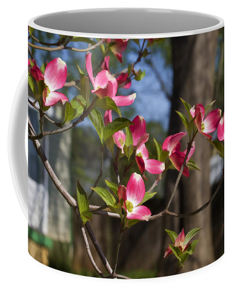Red Coffee Mug featuring the photograph Them Cheery Little Dogwoods by Kathy Clark