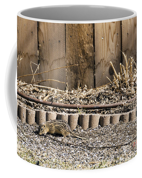 Spring Coffee Mug featuring the photograph Thirteen-lined Ground Squirrel by Edward Peterson