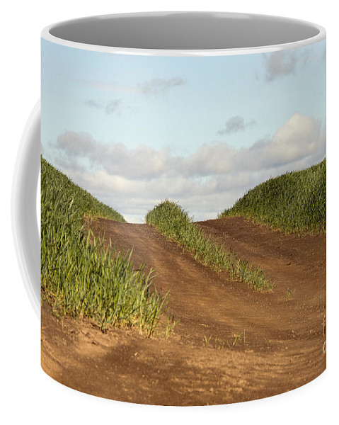 Palouse Area Coffee Mug featuring the photograph This Side Of The Other Side by Bob Phillips
