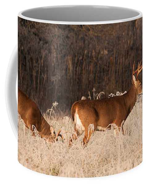 Canada Coffee Mug featuring the photograph This Way by Joye Ardyn Durham