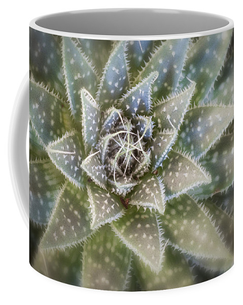 Gardening Coffee Mug featuring the photograph Thorny Succulent by Ludwig Riml