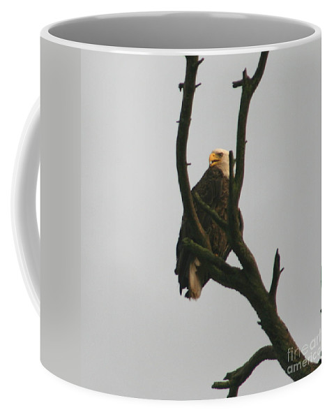 Eagle On Tree Coffee Mug featuring the photograph Threatened by Neal Eslinger