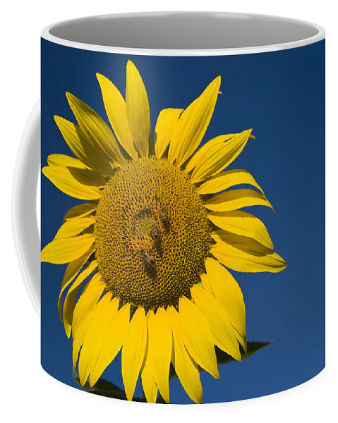3scape Photos Coffee Mug featuring the photograph Three Bees And A Sunflower by Adam Romanowicz