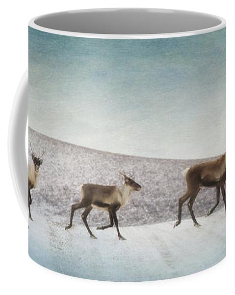 Animal Coffee Mug featuring the photograph Three Caribous by Priska Wettstein