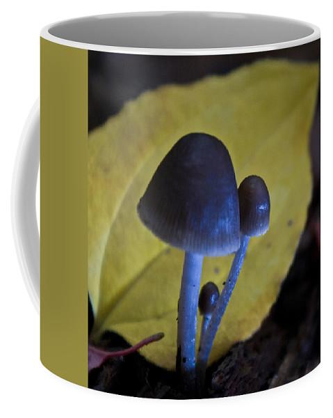 Mushrooms Coffee Mug featuring the photograph Three Little Mushrooms by Douglas Barnett