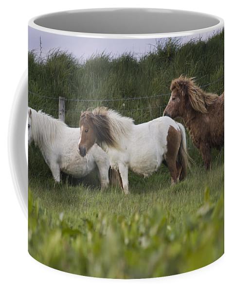 Shetland Coffee Mug featuring the photograph Three Ponies by Angel Ciesniarska