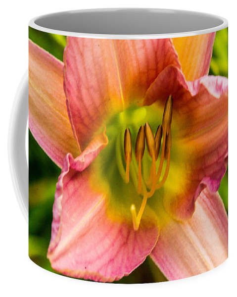 Lily Coffee Mug featuring the photograph Throat Of Lily by Douglas Barnett