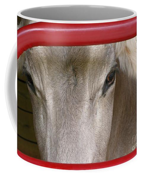 Cow Coffee Mug featuring the photograph Through The Gate by Ann Horn