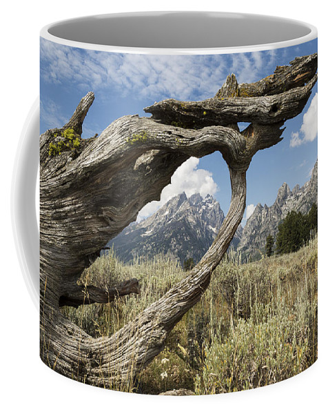 America Coffee Mug featuring the photograph Through The Looking Glass by Elaine Haberland