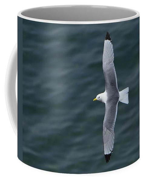 Black-legged Kittiwake Coffee Mug featuring the photograph Tickle-ace by Tony Beck