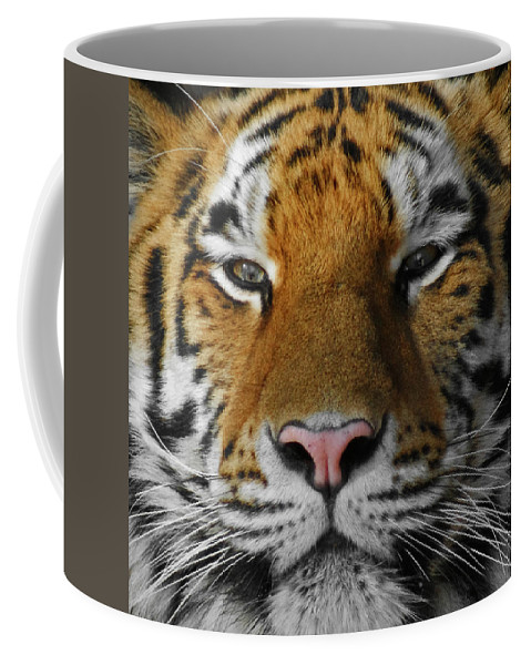 Tiger Coffee Mug featuring the photograph Tiger 1 by Ernie Echols