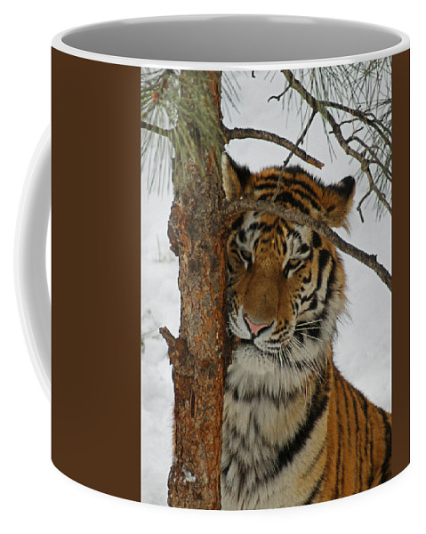 Tiger Coffee Mug featuring the photograph Tiger 2 by Ernie Echols