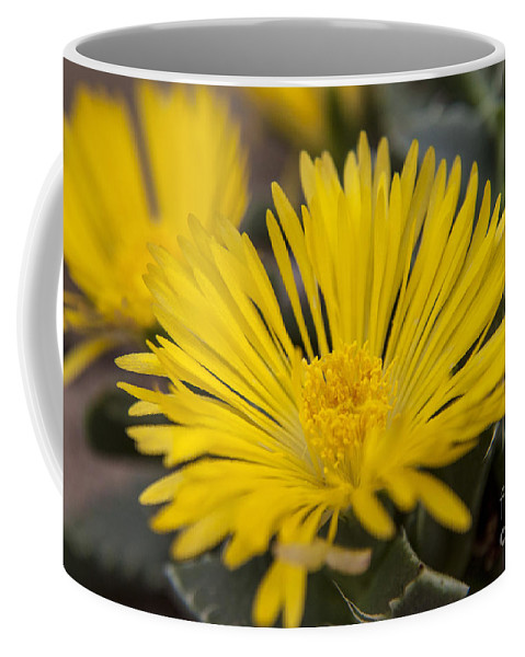 Tiger Coffee Mug featuring the photograph Tiger Claw Plant by Darleen Stry