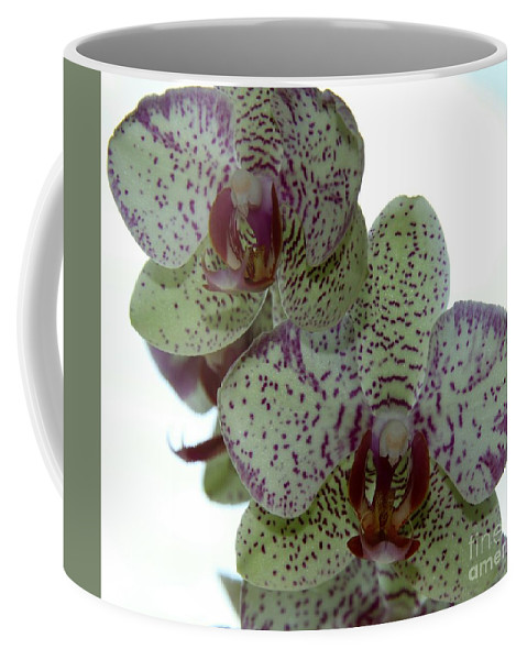 Orchid Coffee Mug featuring the photograph Tiger Orchid by Christiane Schulze Art And Photography