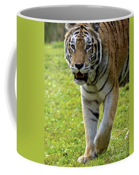 Tiger Coffee Mug featuring the photograph Tiger Tiger by Carol Bradley