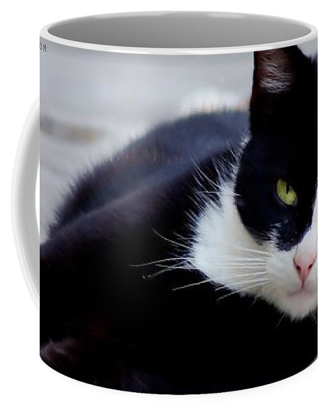 Tuxedo Coffee Mug featuring the photograph Tiggles by Nick Kirby