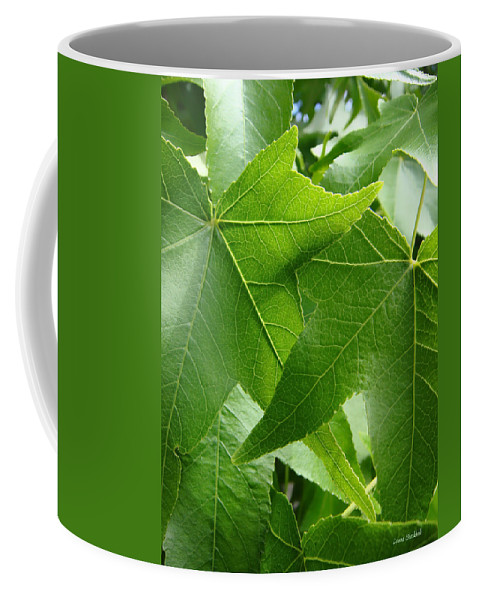 Leaves Coffee Mug featuring the photograph Til Death Us Do Part by Donna Blackhall