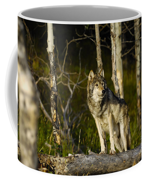 Wolf Coffee Mug featuring the photograph Timber Ghost Wolf by Wildlife Fine Art