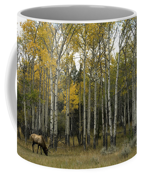 Elk Coffee Mug featuring the photograph Time Fading by Wildlife Fine Art