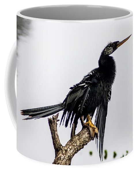 Anhinga Coffee Mug featuring the photograph Time To Dry Out by Norman Johnson