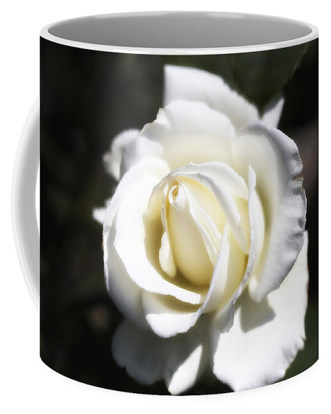 Botanicals Coffee Mug featuring the photograph Tineke White Rose by Linda Dunn