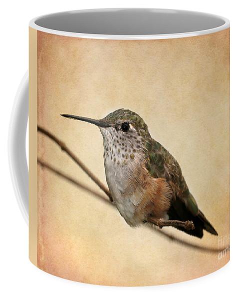 Winter Coffee Mug featuring the photograph Tiny Hummingbird Resting by Sabrina L Ryan