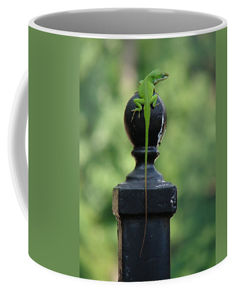 Lizard Coffee Mug featuring the photograph Tip To Tail Reverse by Katherine Sumpter