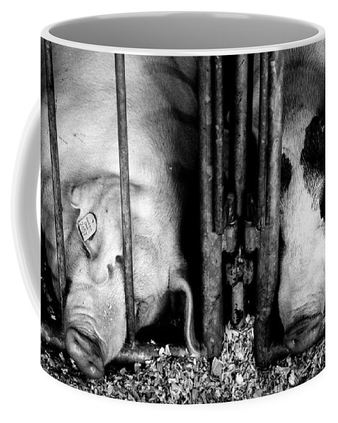 Pigs Coffee Mug featuring the photograph To Pooped To Pig by Rick Rauzi