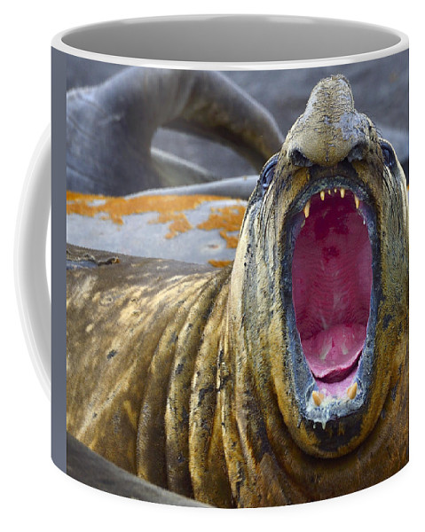Southern Elephant Seal Coffee Mug featuring the photograph Tonsils And Trunks by Tony Beck