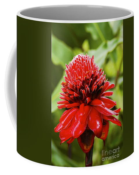 Arenal Volcano Region Costa Rica Torch Red Wild Ginger Lily Flower Flowers Bloom Blooms Blossom Blossom Porcelain Rose Still Life Plant Tropical Plants Coffee Mug featuring the photograph Torch Ginger Single by Bob Phillips