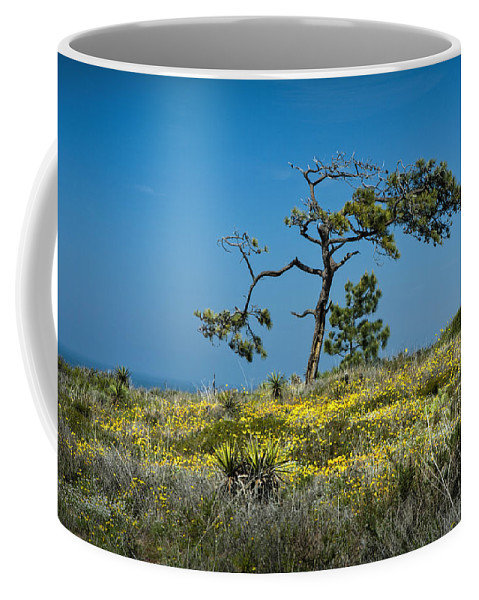 Art Coffee Mug featuring the photograph Torrey Pine On The Cliffs At Torrey Pines State Natural Reserve by Randall Nyhof