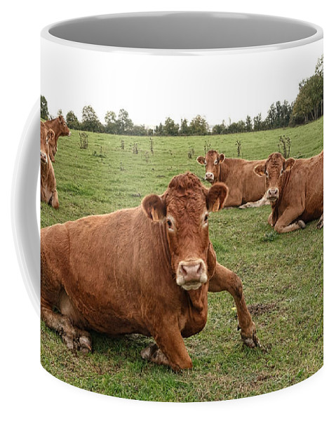 Cow Coffee Mug featuring the photograph Tough Cows by Olivier Le Queinec